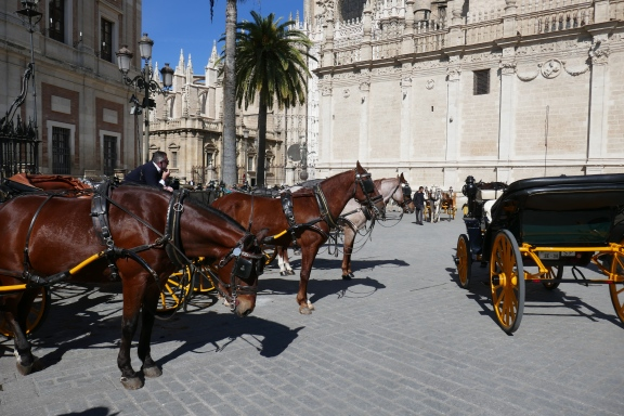 horse and buggy, Plaza del Triunfo, Sevilla, Andalusia, Perspectives with Panache, 2020