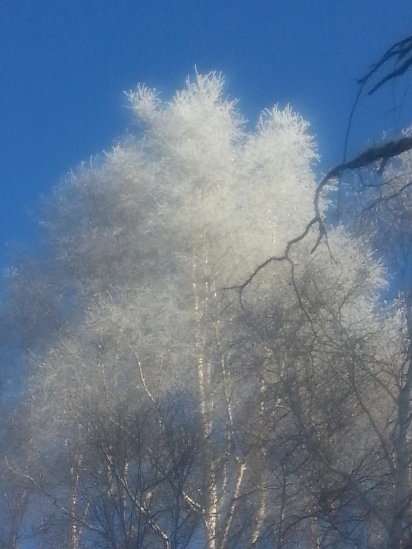winter frost 1
